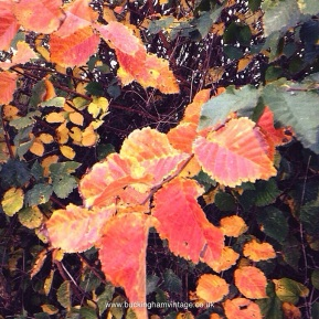 Autumn Leaves. Probably Elm. www.buckinghamvintage.co.uk